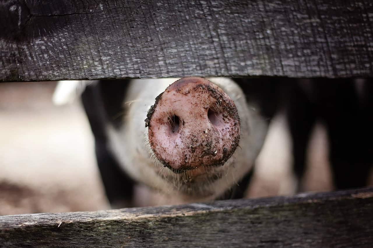 Животните не са суровини за месо