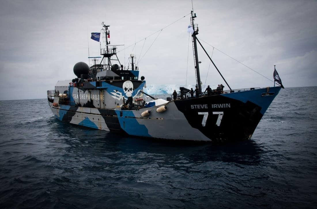 Steve Irwin Sea Shepherd