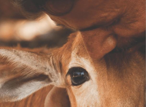 Джипси Вулф: Веганизмът като повратна точка на състраданието