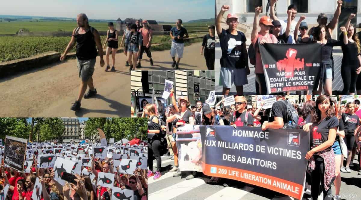 От Лион до Париж: Походът срещу видизма във Франция