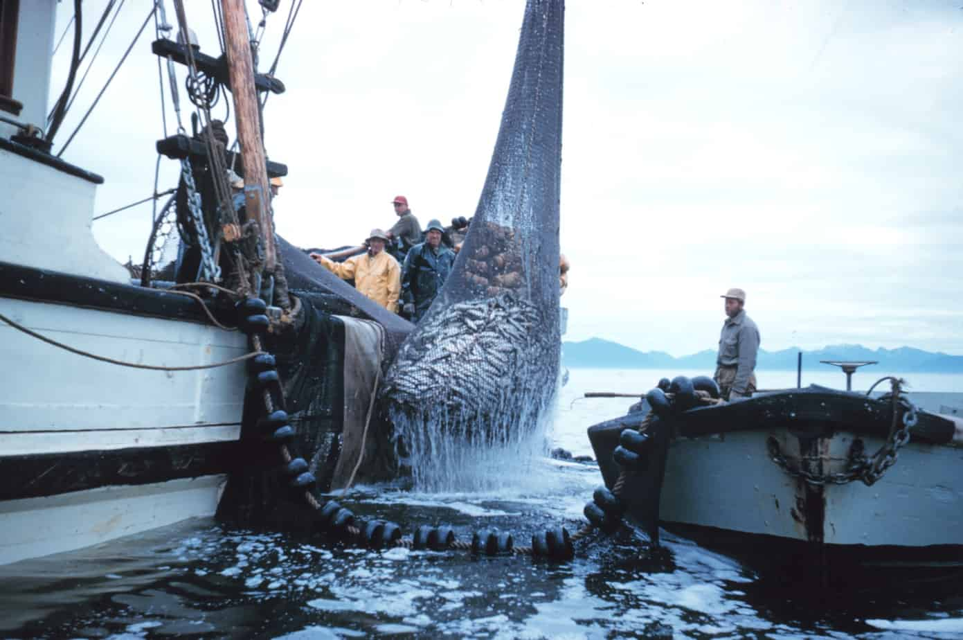 commercial-fishing