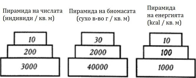 trofichna-piramida