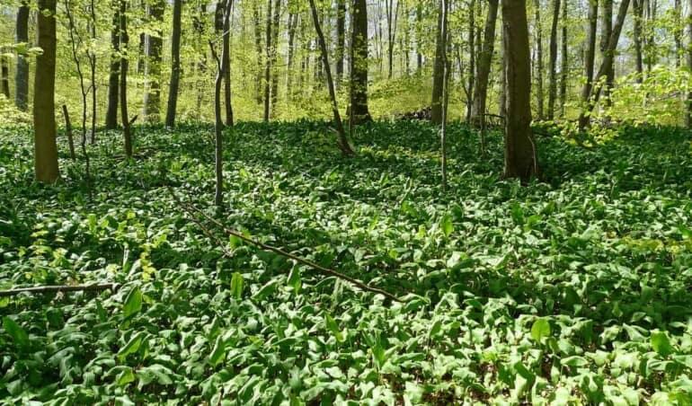 wild-edible-plants